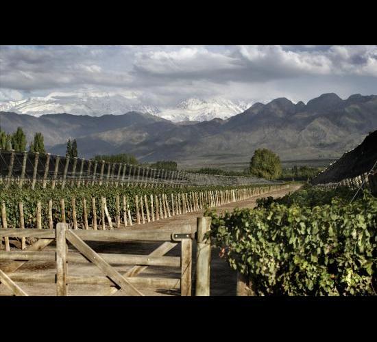 Terrazas De Los Andes Wines Of Argentina